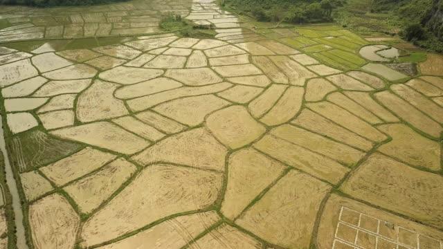 Aerial Video Reisfelder der Karstberge von Guilin, China