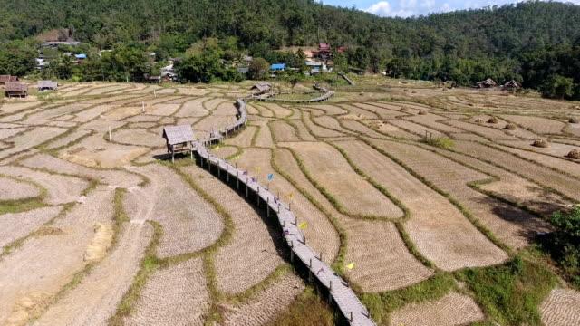 vídeos de stock, filmes e b-roll de vídeo aéreo de campos de arroz - arroz alimento básico