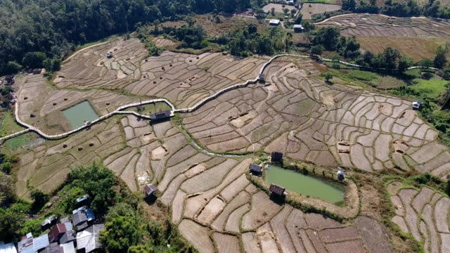 aerial video of rice fields - on top of stock videos & royalty-free footage