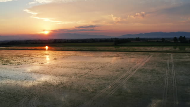 vídeos de stock e filmes b-roll de aerial video of rice paddies at sunset - arroz cereal