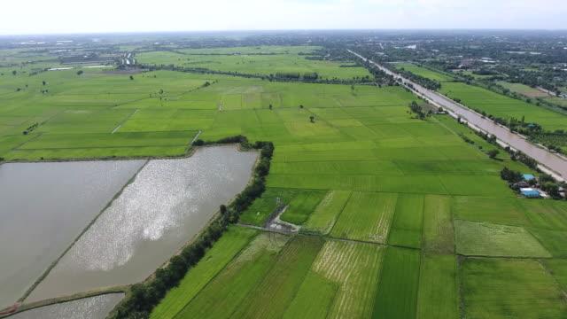 棚田の美しい日で農村地域での空撮 - 農村の風景点の映像素材/bロール