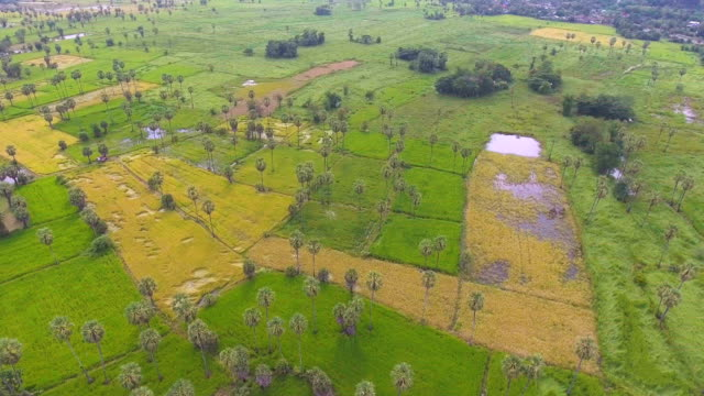 aerial video of rice terraces in a beautiful day in rural area - cambodia stock videos and b-roll footage