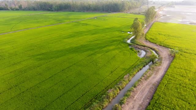 日光の美しい日の棚田と農村地域で長い影の空撮 - 農村の風景点の映像素材/bロール