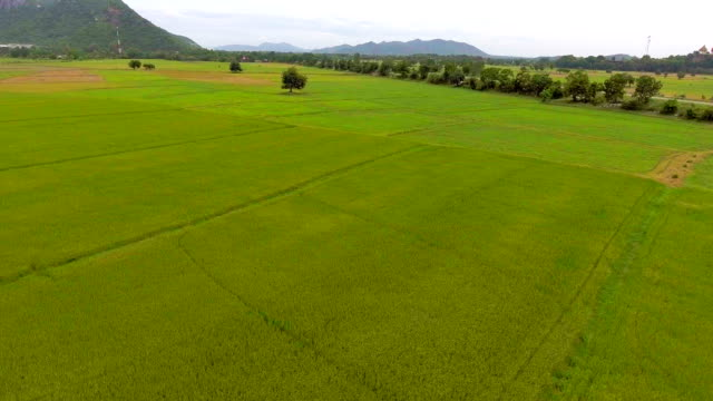 Aerial video of rice terraces in rural area in a beautiful day