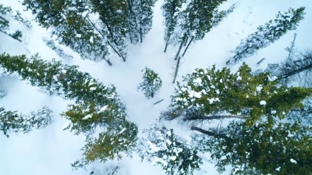 aerial video of snowy, winter mountain landscape in colorado u.s.a. - powder snow stock videos & royalty-free footage