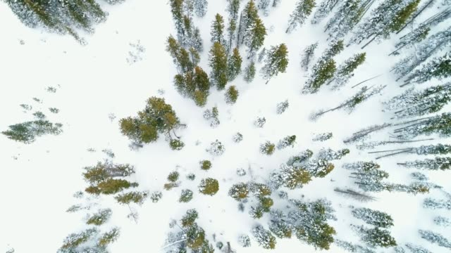 aerial video of snowy, winter mountain landscape in colorado u.s.a. - pinaceae stock videos & royalty-free footage