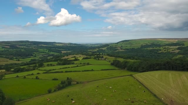 Aerial Video of the Esk Valley-Rising shot with farmland and cows.