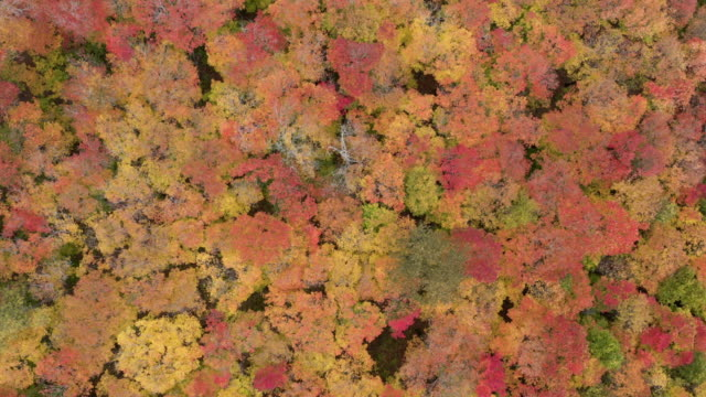 4k aerial video of the fall colors of laurentian mountains forest in autumn season, quebec, canada - spiral stock videos & royalty-free footage