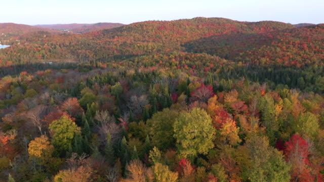 4k luftbild der herbstfarben des laurentian mountains wald in der herbstsaison, quebec, kanada - kanada stock-videos und b-roll-filmmaterial