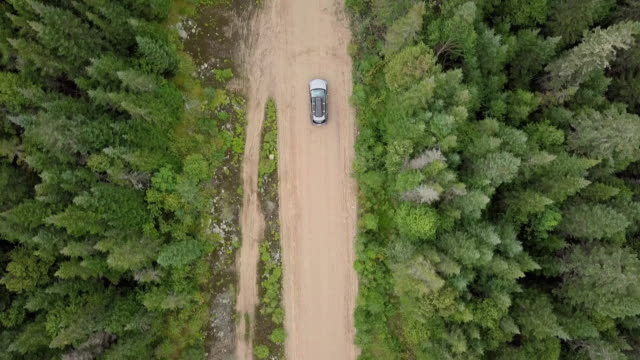 4k aerial video view of a road in the forest - strada in terra battuta video stock e b–roll