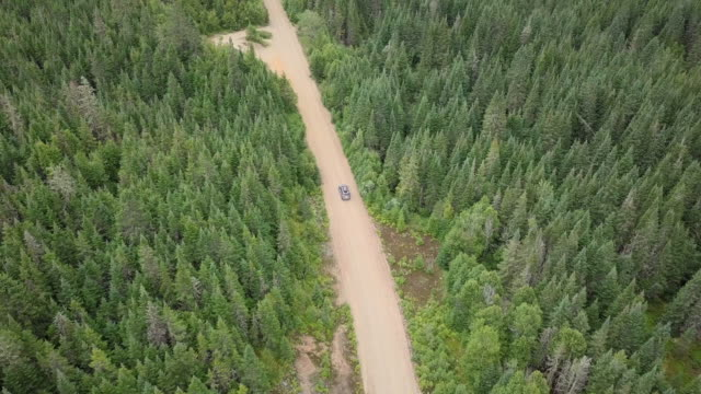 4k aerial video view of a road in the forest - dirt track stock videos and b-roll footage