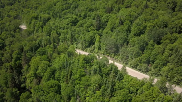 4K Aerial Video View of a Road in the Forest