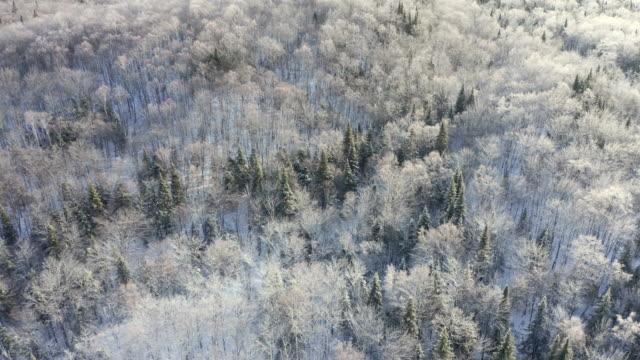 カナダ・ケベック州日の出に降った後の冬のボレアル自然林の4k航空ビデオ写真 - 寒帯林点の映像素材/bロール