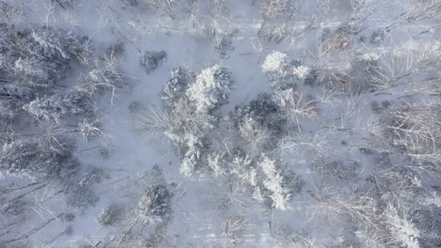 4k aerial video view of boreal nature forest in winter after snowstorm, quebec, canada - quebec stock videos & royalty-free footage