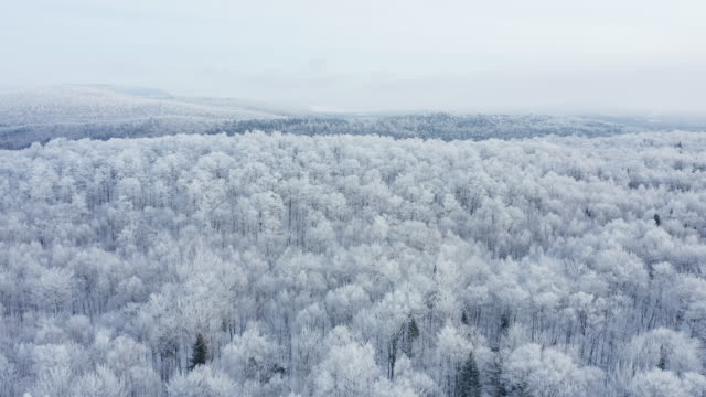 4k aerial video view of boreal nature forest in winter after snowstorm, quebec, canada - deep snow stock videos & royalty-free footage