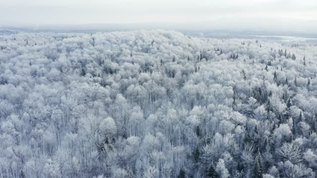 vídeos de stock e filmes b-roll de 4k aerial video view of boreal nature forest in winter after snowstorm, quebec, canada - a nevar