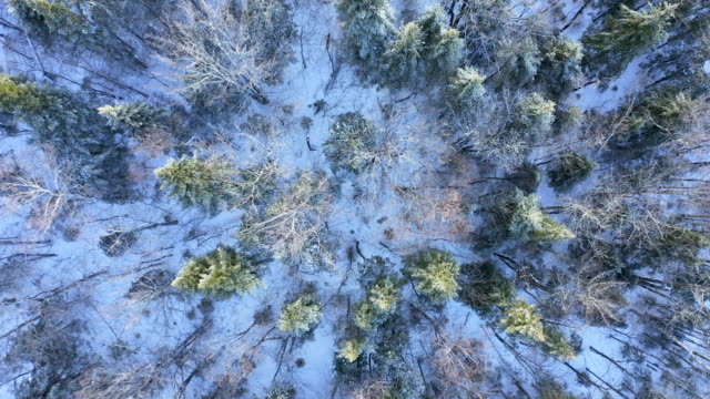 4k aerial video view of boreal nature forest in winter after snowstorm, quebec, canada - boreal forest stock videos & royalty-free footage