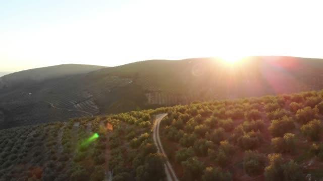 vídeos y material grabado en eventos de stock de aerial videw of olive grove in country of jaen, andalucia, spain - agricultural field
