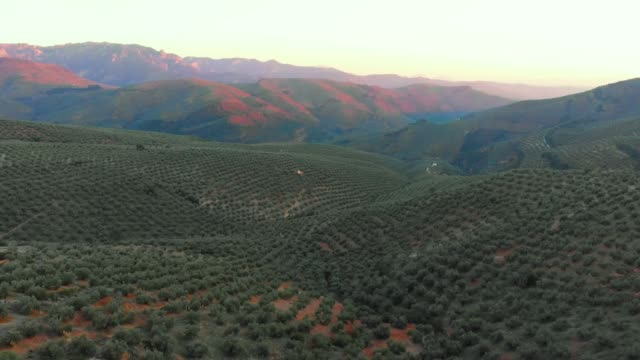 aerial videw of olive grove in country of jaen, andalucia, spain - andalucia stock videos & royalty-free footage