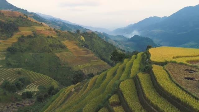 ムー・カンチャイ、ベトナムの空中写真4k映像米グリーンフィールド - ホーチミン市点の映像素材/bロール