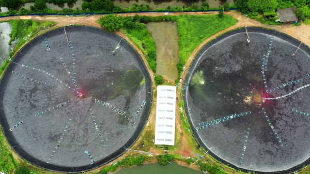 aerial view agriculture shrimp farm and prawn farming - prawn stock videos & royalty-free footage