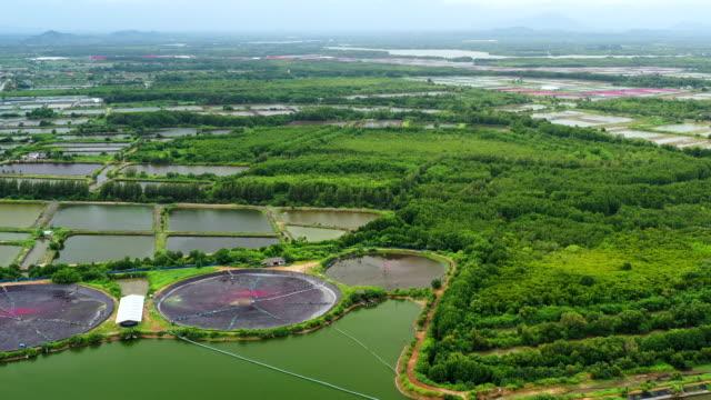 空中ビュー農業エビ農場とエビ養殖 - テナガエビ点の映像素材/bロール