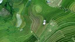 Aerial view amazing landscape Rice fields on terraced at Mu Cang Chai Vietnam,Beautiful terraced rice field in harvest season in north Vietnam