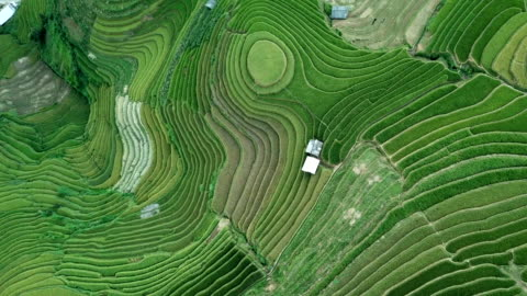 aerial view amazing landscape rice fields on terraced at mu cang chai vietnam,beautiful terraced rice field in harvest season in north vietnam - telecommunications equipment stock videos & royalty-free footage