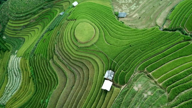 aerial view amazing landscape rice fields on terraced at mu cang chai vietnam,beautiful terraced rice field in harvest season in north vietnam - rice terrace stock videos and b-roll footage