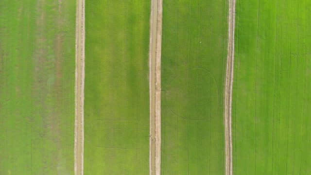 aerial view and dolly forward: flat lay of rice field pattern. - flat lay stock videos & royalty-free footage