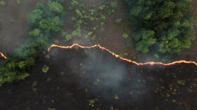 aerial view and dolly shot of forest fire. - climate change stock videos & royalty-free footage