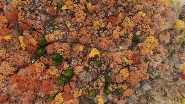 空撮、曲がりくねった道を秋の季節に、日本のズームイン。