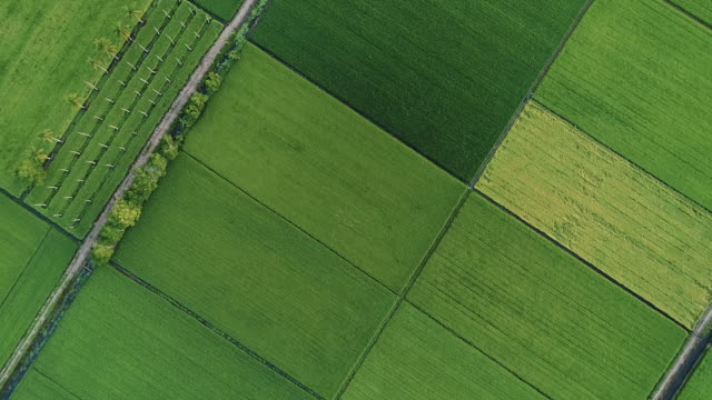 aerial view asian paddy field - natural pattern stock videos & royalty-free footage