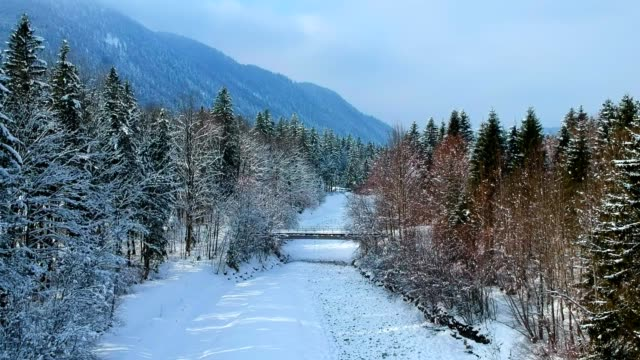 aerial view: austrian forest in winter - fir tree stock videos & royalty-free footage