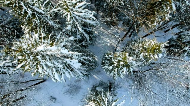 aerial view: austrian forest in winter - fir tree stock videos and b-roll footage