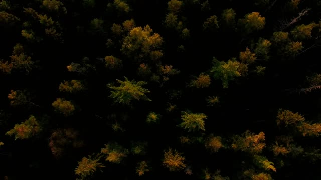 aerial view: bavarian forest in autumn - pinaceae stock videos & royalty-free footage