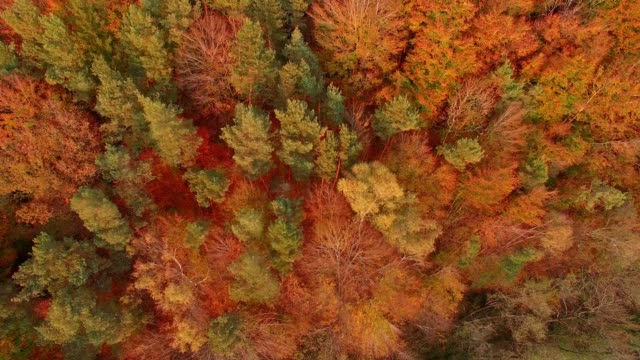 aerial view: bavarian forest in autumn - european alps stock videos & royalty-free footage