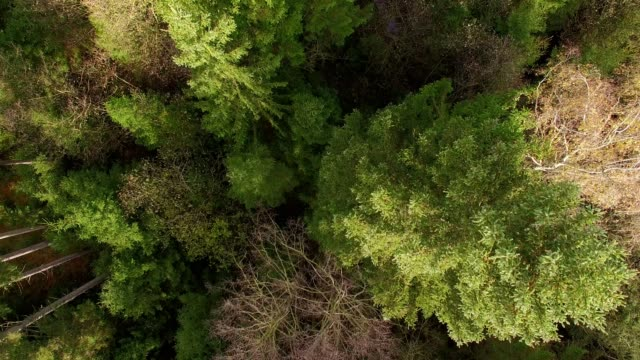 Aerial view: Bavarian forest in autumn