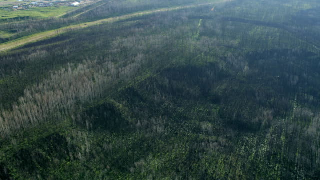 aerial view boreal forest fort mcmurray albert canada - remote location stock videos & royalty-free footage