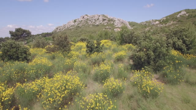 Aerial view broom (genista) and the Alpilles mountains