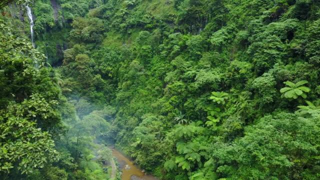 vídeos y material grabado en eventos de stock de 4k: vista aérea de secuencias del abejón cascada madakaripura, east java, indonesia - cultura indonesia