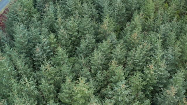 stockvideo's en b-roll-footage met luchtfoto gevangen genomen door een drone van dennenbossen in een landelijk deel van dumfries en galloway in de winter. - crane shot