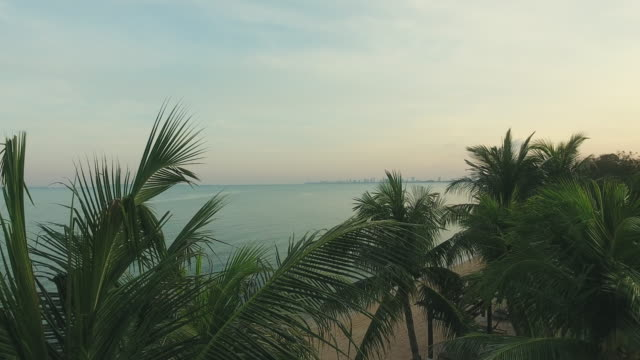 aerial view; coconut palm tree with landscape sea surface reflection of sunrise-dawn. - coconut palm tree stock videos & royalty-free footage