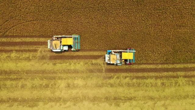 aerial view combine harvester operation on the paddy rice field. - tractor stock videos & royalty-free footage