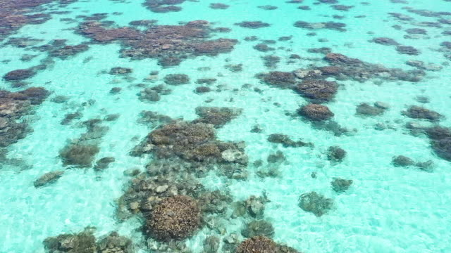 aerial view coral reef - coral cnidarian stock videos & royalty-free footage