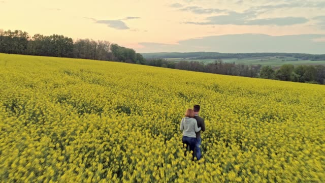 ws aerial view couple standing in tranquil,idyllic yellow canola field,enjoying view of rural landscape,slovenia - oilseed rape stock videos & royalty-free footage