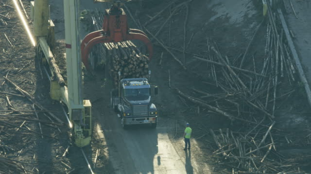 Aerial view crane moving timber to be processed
