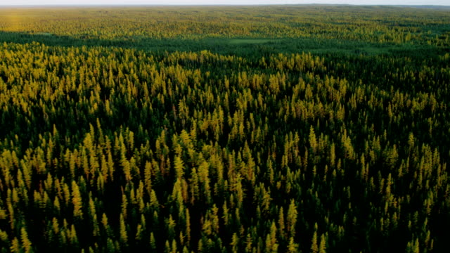 aerial view deciduous forest wilderness alberta canada - alberta stock videos & royalty-free footage