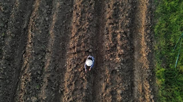 vídeos de stock e filmes b-roll de aerial view directly above a farmer checks quality of soil before sowing. - one mid adult man only