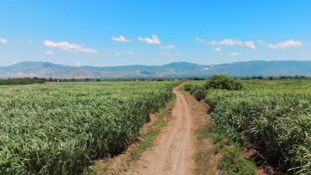 vídeos y material grabado en eventos de stock de aerial view dirt track among sugarcane fields with mountains behind - hispaniola